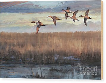 Pintail Fly By Wood Print
