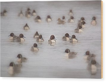 Pintail Repeat  Wood Print by Kelly Marquardt