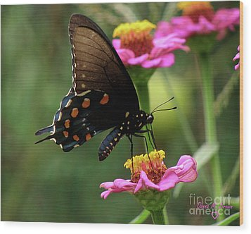 Wood Print featuring the photograph Pipevine Swallowtail Butterfly by Donna Brown