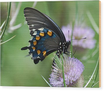 Pipevine Swallowtail Wood Print by Randy Bodkins