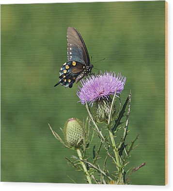 Wood Print featuring the photograph Pipevine Swallowtail by Sandy Keeton