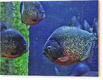 Wood Print featuring the photograph Piranha Blue by Jan Amiss Photography
