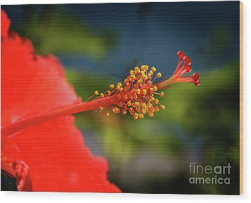 Wood Print featuring the photograph Pistil Of Hibiscus by Robert Bales