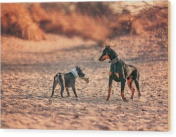 Wood Print featuring the photograph Pitbull And Doberman by Peter Lakomy
