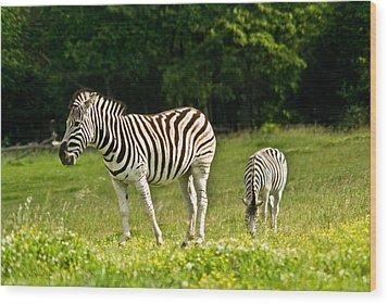 Plains Zebra 1 Wood Print by Douglas Barnett