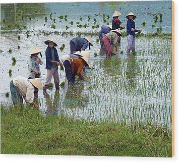 Planting Rice Wood Print