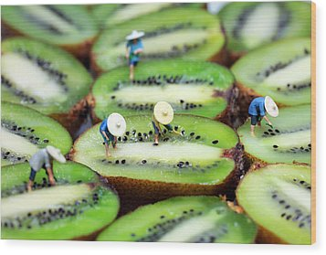 Planting Rice On Kiwifruit Wood Print