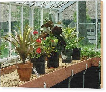 Plants In Greenhouse Wood Print by Susan Savad