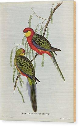 Platycercus Icterotis Wood Print by John Gould