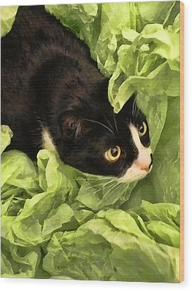 Playful Tuxedo Kitty In Green Tissue Paper Wood Print