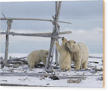 Playtime In The Arctic Wood Print
