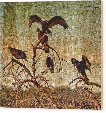 Pleasanton Vultures Wood Print by Steve Siri
