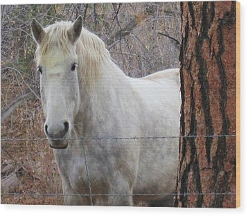 Wood Print featuring the photograph Please Come Pet Me by Tammy Sutherland