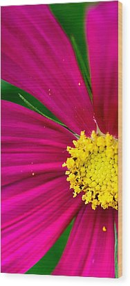 Plink Flower Closeup Wood Print by Michael Bessler