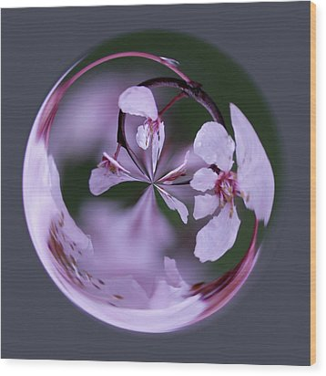 Plum Tree Orb Wood Print by Bill Barber
