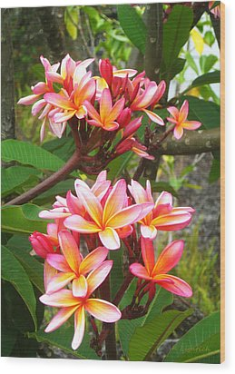 Plumeria - Pink And Orange Wood Print by Kerri Ligatich