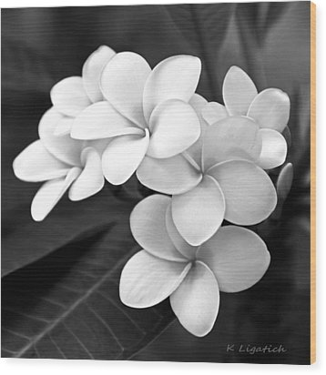 Plumeria - Black And White Wood Print by Kerri Ligatich