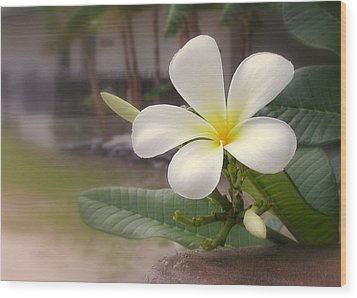 Plumeria Bloom Wood Print by Cindy Wright