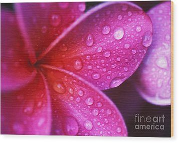 Plumeria Blossom Wood Print by Ron Dahlquist - Printscapes