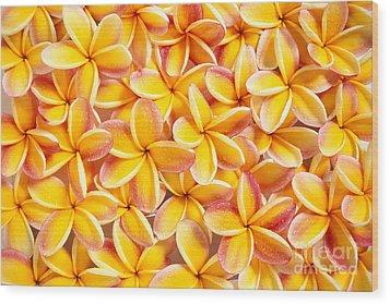 Plumeria Flowers Wood Print by Kyle Rothenborg - Printscapes