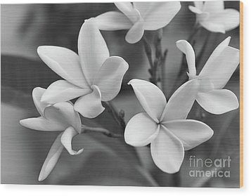 Plumeria Flowers Wood Print by Olga Hamilton