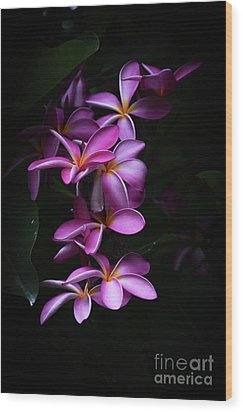 Wood Print featuring the photograph Plumeria Light by Kelly Wade