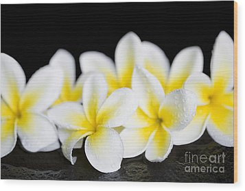 Wood Print featuring the photograph Plumeria Obtusa Singapore White by Sharon Mau
