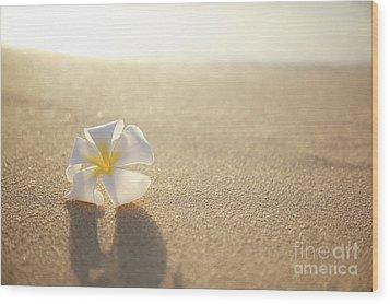 Plumeria On Beach I Wood Print by Brandon Tabiolo - Printscapes