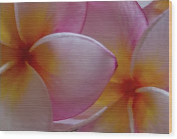 Wood Print featuring the photograph Plumeria Pair by Roger Mullenhour