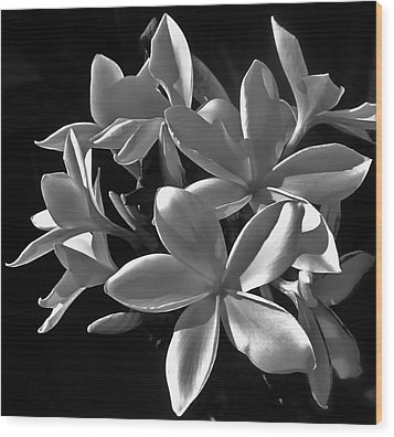 Plumeria Proper Evening Wood Print by Gwyn Newcombe