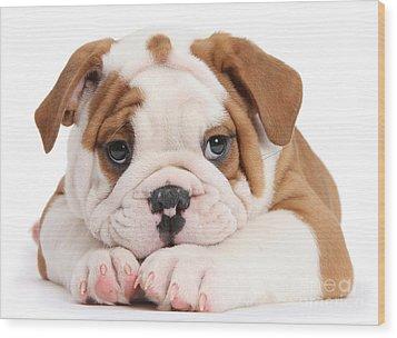 Po-faced Bulldog Wood Print