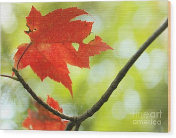 Wood Print featuring the photograph Poesie D'automne  by Aimelle
