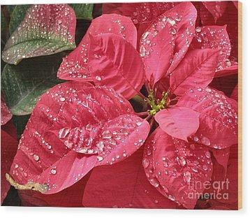 Poinsettia Christmas Dew Wood Print by Kathy Daxon