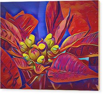 Poinsettia Closeup Wood Print