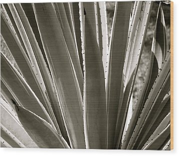 Pointy Plant Wood Print by Santiago Rodriguez