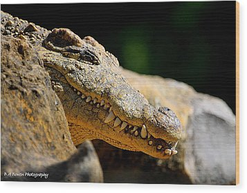 Wood Print featuring the photograph Pointy Teeth by Barbara Bowen