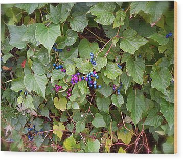Poisonous Snozzberries Wood Print by Jacqueline Cappadora