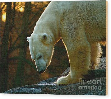 Wood Print featuring the photograph Polar Bear by Louise Fahy
