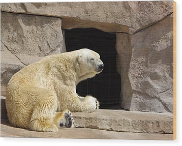 Polar Bear Prayers Wood Print by Linda Mishler