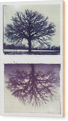 Polaroid Transfer Tree Wood Print by Jane Linders