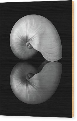 Wood Print featuring the photograph Polished Nautilus Shell And Reflection by Jim Hughes