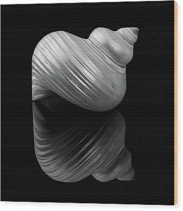 Wood Print featuring the photograph Polished Turban Shell And Reflection by Jim Hughes