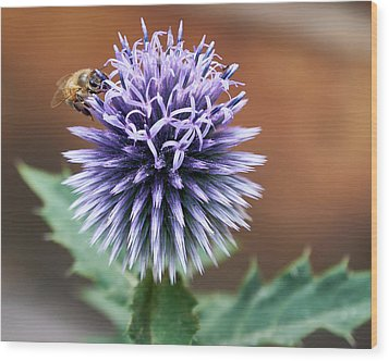 Wood Print featuring the photograph Pollen Rustler by Trever Miller