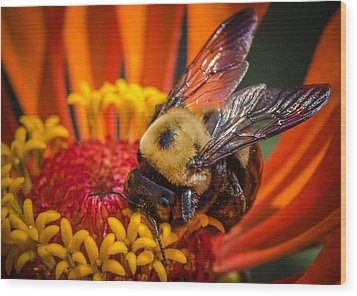 Pollen Plenty Wood Print by Bruce Pritchett