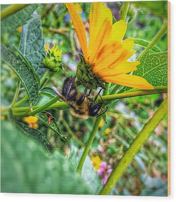 Wood Print featuring the photograph Pollinated Buzz by Jame Hayes