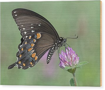 Wood Print featuring the photograph Pollinating #1 by Wade Aiken