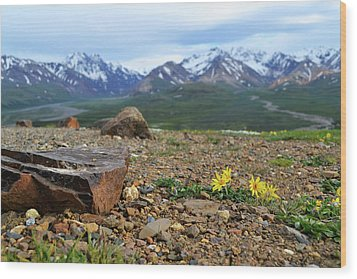 Polychrome Pass, Denali Wood Print by Zawhaus Photography