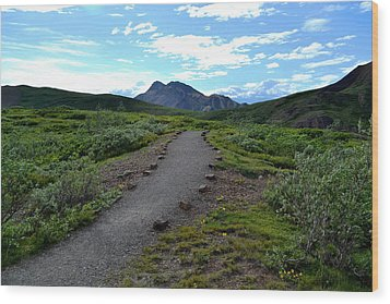Wood Print featuring the photograph Polychrome Pass Trail, Denali by Zawhaus Photography