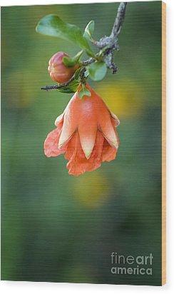 Pomegranate  Bud 2 Wood Print by Jeannie Burleson