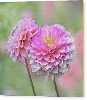 Wood Print featuring the photograph Pompon Dahlias by John Poon